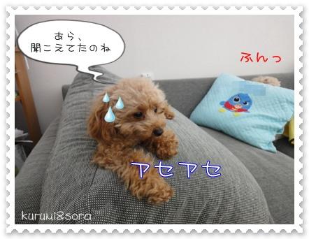 b6_20110121233508.jpg