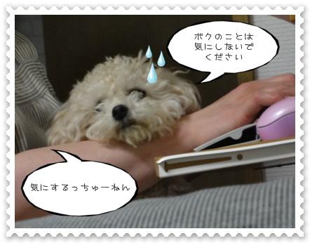 b6_20110702204433.jpg