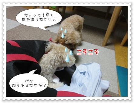 b6_20110806191109.jpg