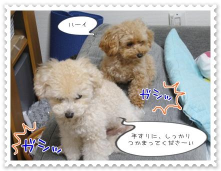 b6_20111130214602.jpg