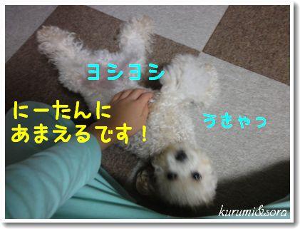 b7_20101127153115.jpg