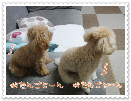 b7_20111130214650.jpg