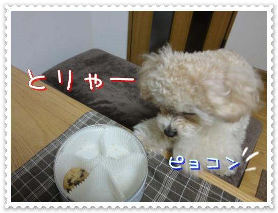 b8_20110110015053.jpg
