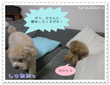 b8_20110219215004.jpg