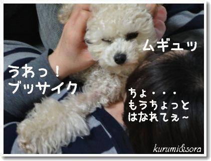 b9_20101127153112.jpg