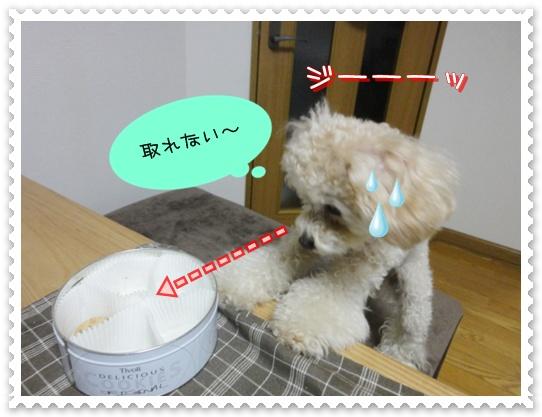 b9_20110110015052.jpg