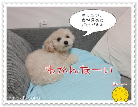 b9_20110310211045.jpg