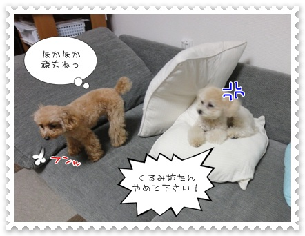 b9_20110505144753.jpg