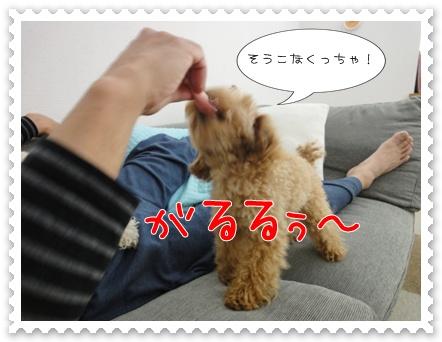 b9_20110531163023.jpg
