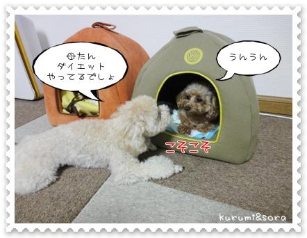 b9_20110615181618.jpg