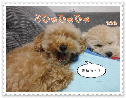 b9_20111107225919.jpg