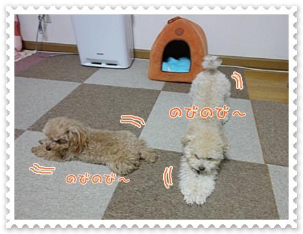 b9_20120129164937.jpg
