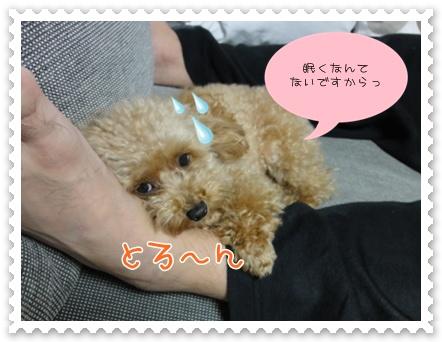 c11_20111004200101.jpg