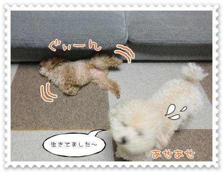 c12_20120131151930.jpg