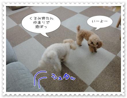 c13_20110807182741.jpg