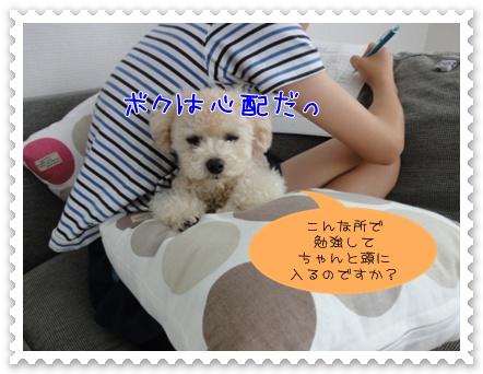 c2_20110930152401.jpg