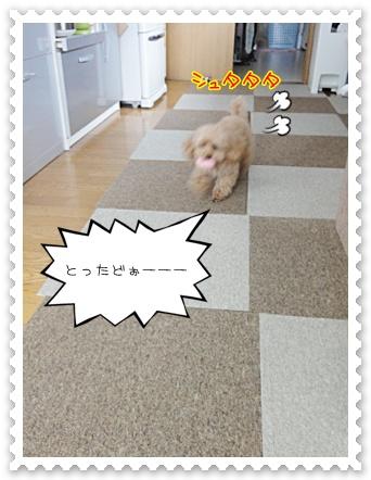 c2_20120212150735.jpg