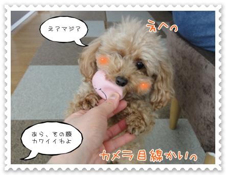 c5_20120212150951.jpg
