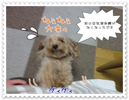 c6_20111123181619.jpg