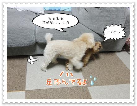 c6_20120131150152.jpg