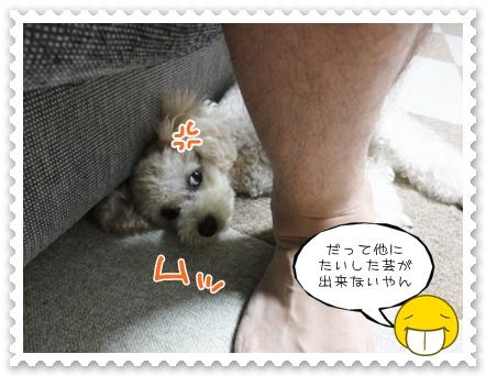 c8_20110905231302.jpg
