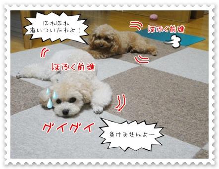 c8_20111018203245.jpg