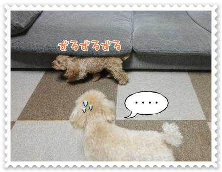 c8_20120131151931.jpg