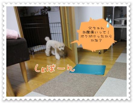 d19_20111002121913.jpg