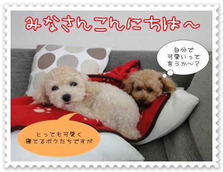 d1_20111002121617.jpg