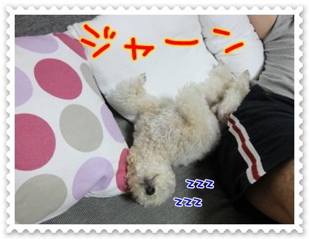 d4_20111002121616.jpg