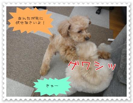 d5_20110315164948.jpg