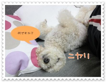 d6_20111002121616.jpg