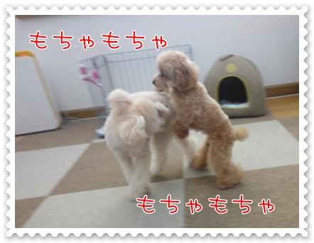 d8_20110315165031.jpg