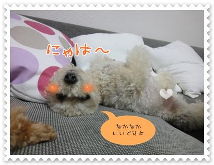 d9_20111002121726.jpg