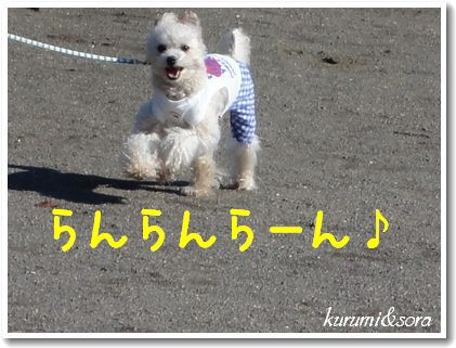 k10_20101023182758.jpg