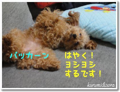 n10_20101031204136.jpg