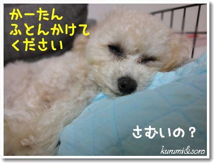 n10_20101118194526.jpg