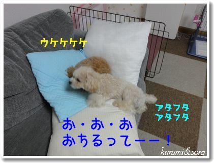 n10_20101120204652.jpg