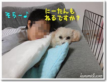 n12_20101118194524.jpg