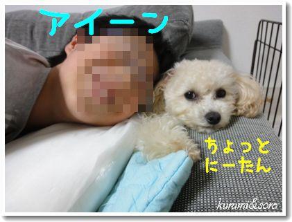 n13_20101118194559.jpg