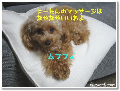 n16_20101118194557.jpg
