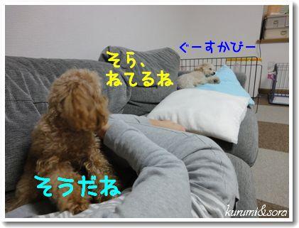 n3_20101118194443.jpg