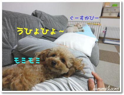 n5_20101118194441.jpg