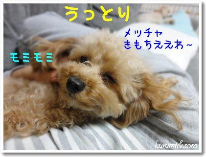 n6_20101118194440.jpg
