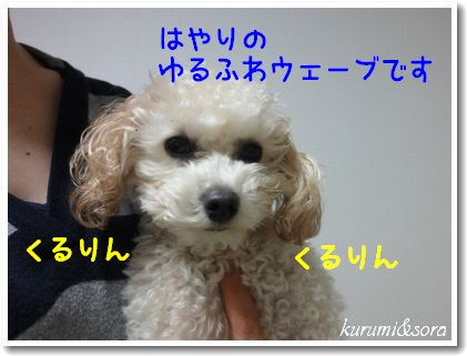 o4_20101123125004.jpg