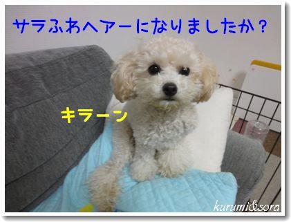 o5_20101123125004.jpg