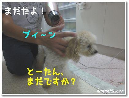 o8_20101123125045.jpg
