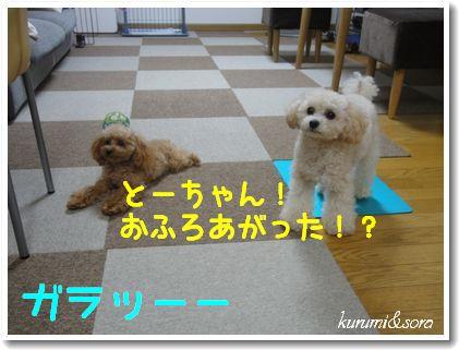 t2_20101102202014.jpg
