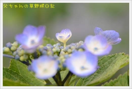 2011062103.jpg