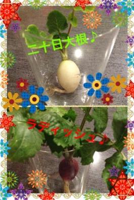 野菜chan1